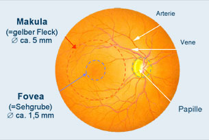 Anatomie der Retina